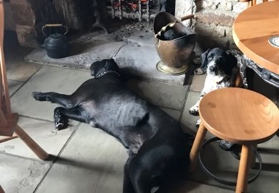Bruce (black Lab) relaxing after a good walk and Monty in one of his quieter moments.