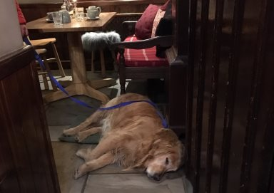After a hard day's walking Merlin chills out in the bar!