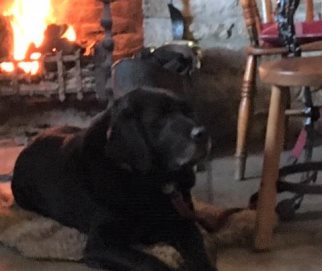 Baxter in the classic Lab pose of lying down by a nice crackling fire!